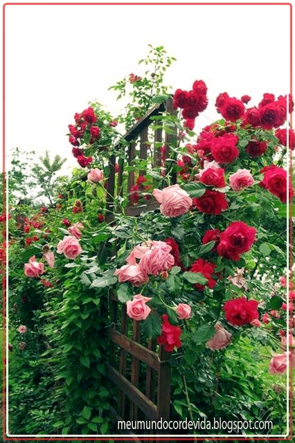 rosas por todos os cantos
