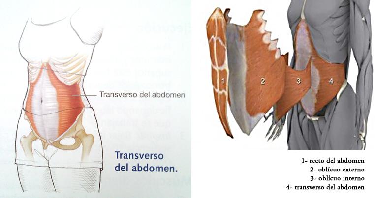 Abdominales hipopresivos - Culturismo total
