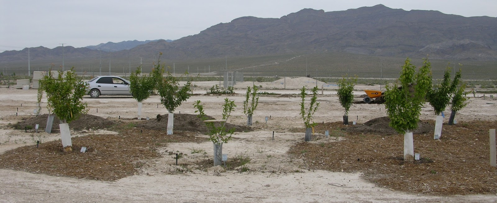 Xtremehorticulture Of The Desert Where To Get Woodchip