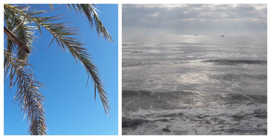 mer et palmiers