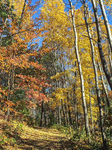 Along the Black River Forest Nature Trail