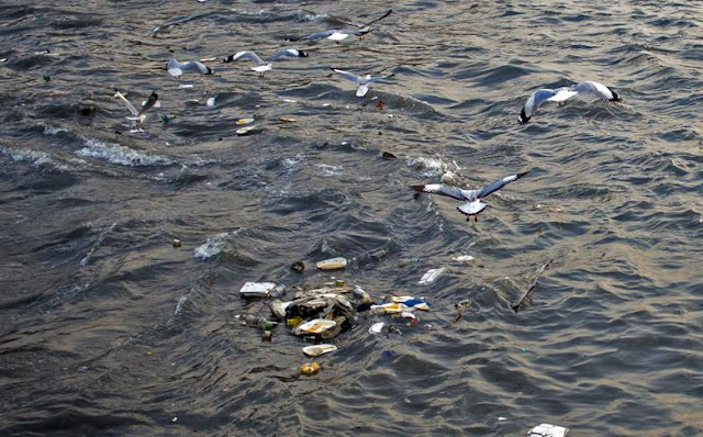 seagulls food leftovers overboard fishermen boats sea sassoon docks mumbai india