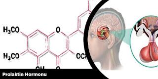 Prolaktin Hormonu
