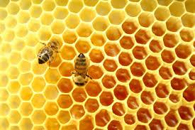 Arılar Peteklerini Neden Altıgen Yaparlar?