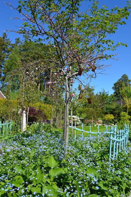 En solrik dag i Cornelias Verden - Vakkert blått gjerde rammer inn et Magnoliatre