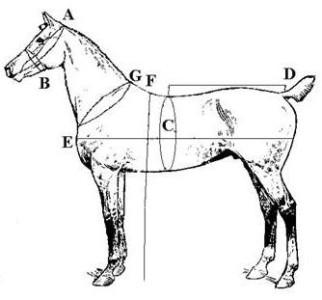 English , Western. Horse. Pony .Mini Saddles and Tack for