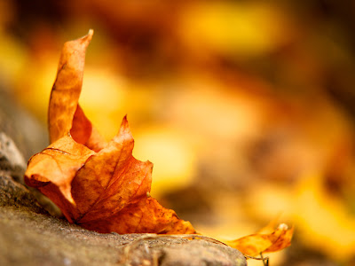 Autumn Season Standard Resolution HD Wallpaper 13