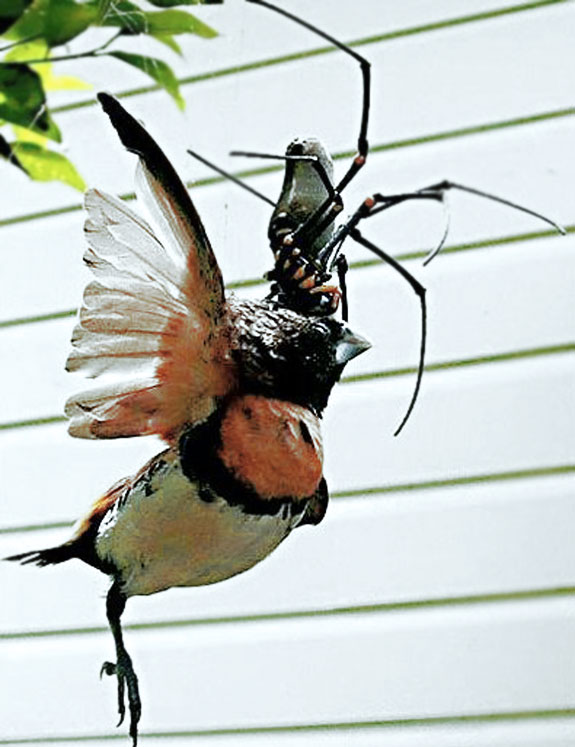 Deadly Kingdom: Spiders Eating Birds and Snakes