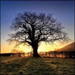 Tree of competencies
