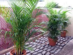 Plantas de sombra cuidado de las plantas bueno saber - Plantas de sol y sombra ...