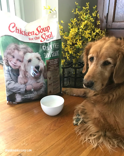 grain free dog food for your dog with allergies