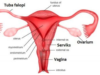 BETADINE Feminine Hygiene: Bahaya Keputihan Pada Wanita