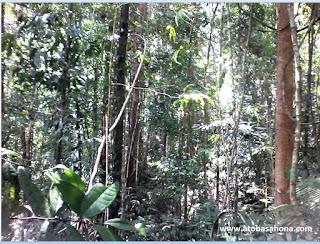 Manfaat dan Fungsi Hutan sebagai sumber kehidupan