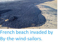 https://sciencythoughts.blogspot.com/2018/04/french-beach-invaded-by-by-wind-sailors.html