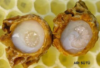 arı sütünün yararları