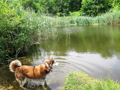 Dogs enjoying Summer activities