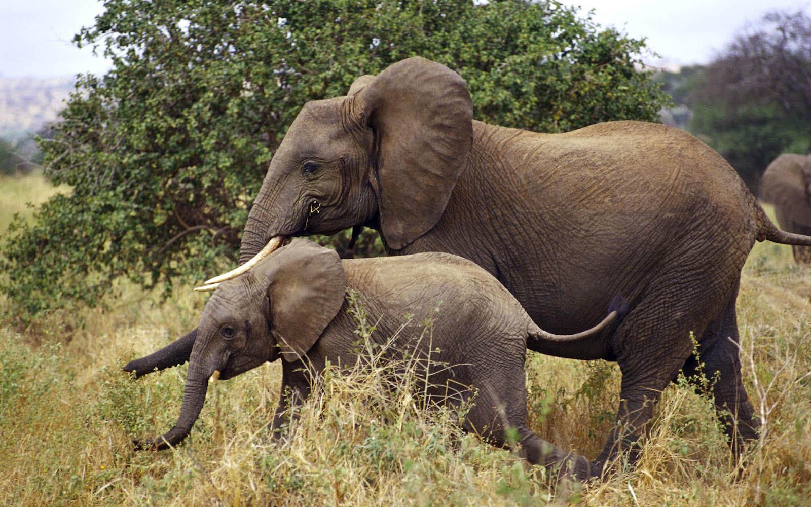 Wildlife Wallpapers Desktop Wallpaper