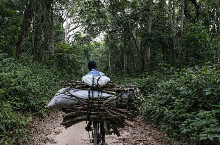 Collecting firewood in the Democratic Republic of Congo