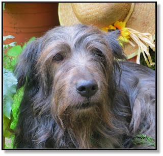 Hund Lotte
