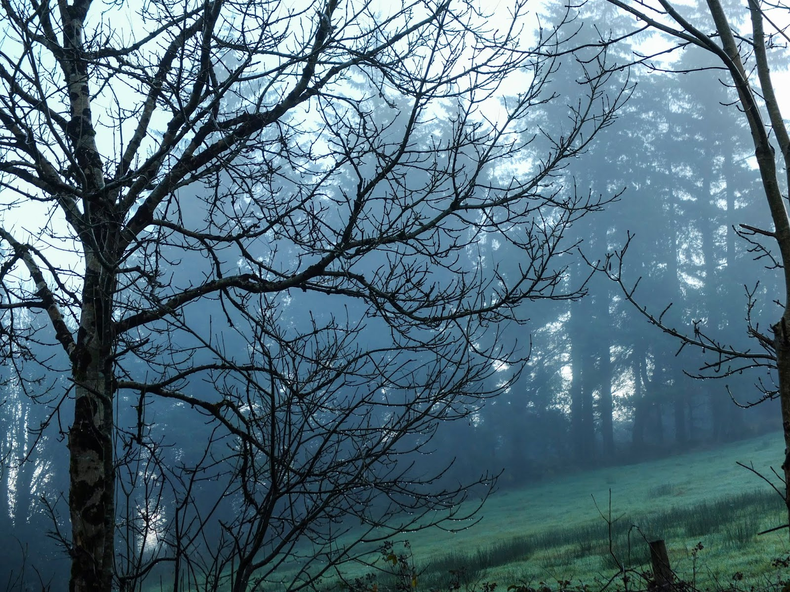 Fog covered hill side in North Cork on a misty November morning.