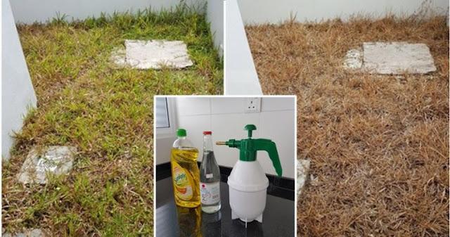 Keren! Cairan ini Ampuh Bunuh Rumput Liar di Pekarangan, Bisa Dibuat Sendiri di Rumah