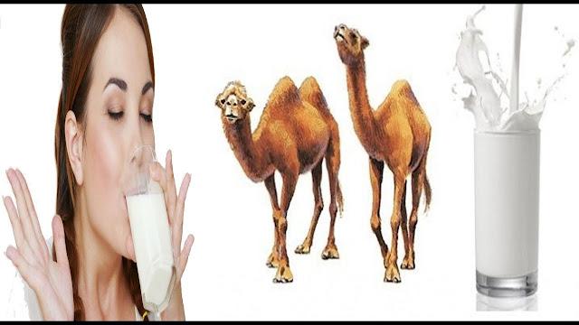 ऊंट के बारे में रोचक जानकारी best   20 best knowledge of Camel