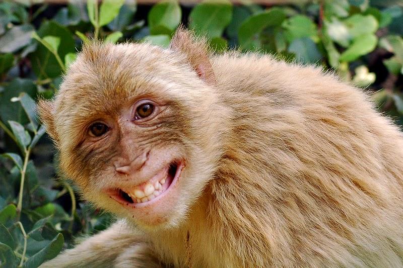 Το... μαϊμού φάουλ του 1-0 (pic)