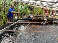 Wajib Tahu! Manfaat Plastik UV Untuk Kolam Ikan, Lebih Awet & Aman Dari Serangan Hama