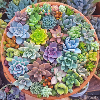 Fertilising for healthy succulents
