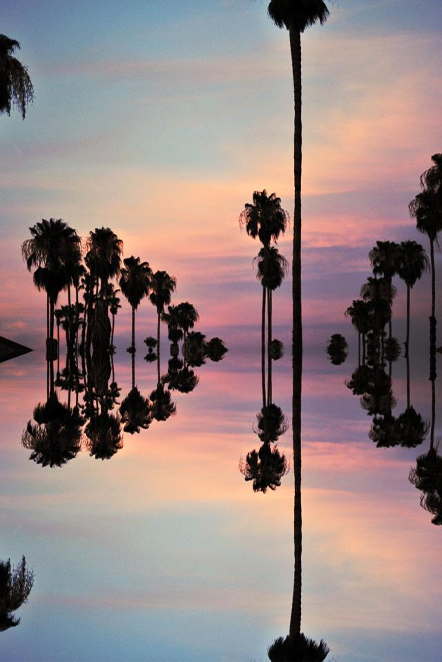 palm trees pink sky sunset reflection