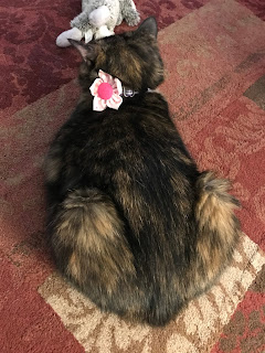 Paisley cat loafing