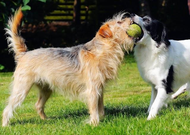 Irish Dog Breeds List | Top 10 Popular Irish Dogs From Ireland