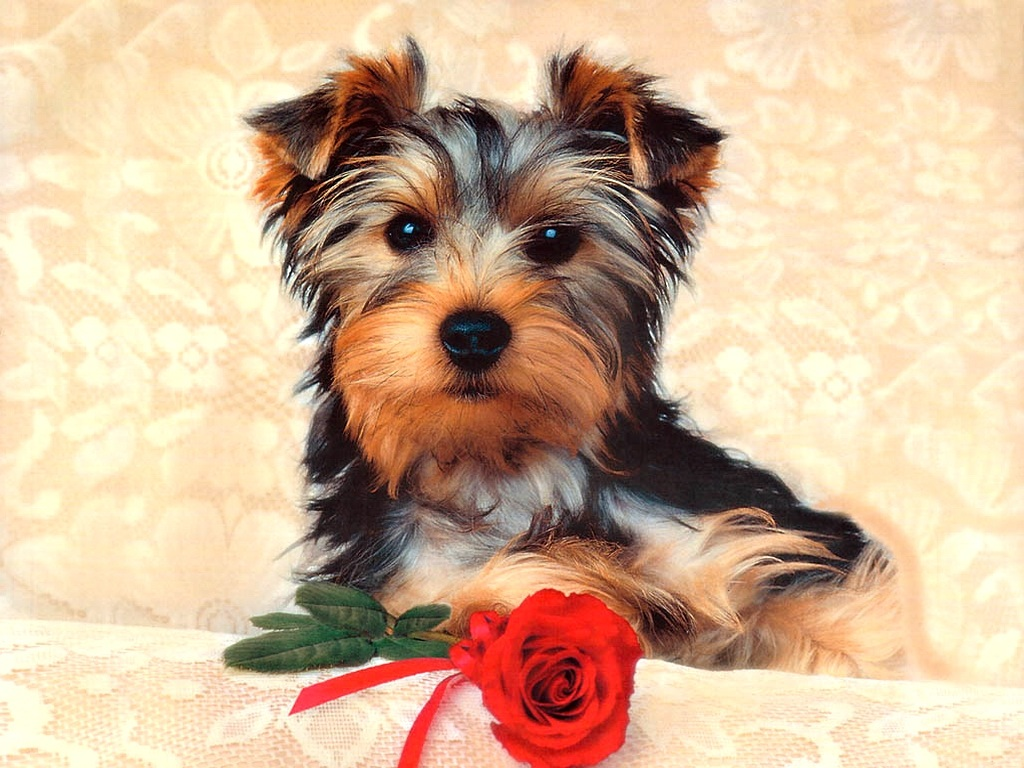 HD Animals: cute dogs and puppies wallpaper