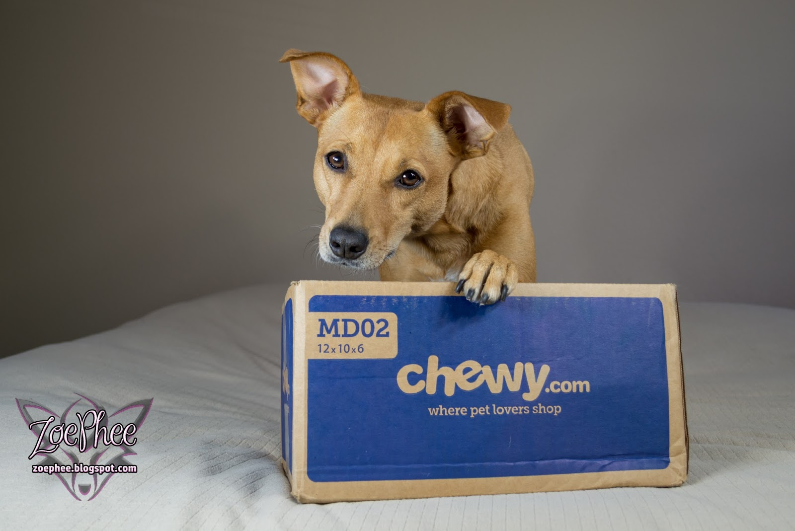 Best Dry Dog Food Chewy