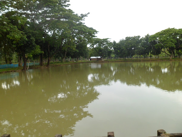 Pond Management How To Prepare And Manage Pond For Fish Farming