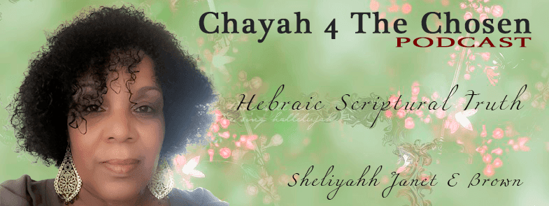 Chayah 4 The Chosen