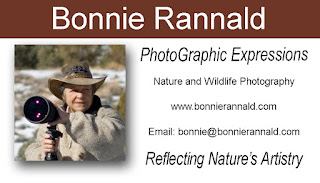 Bonnie Rannald Business Card