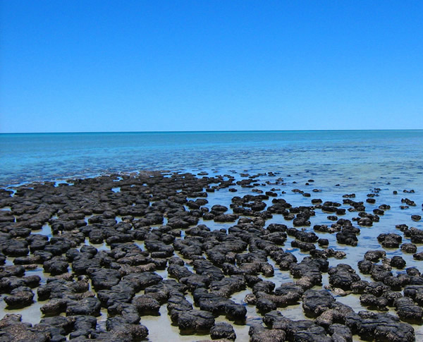 A lot of stromatolites