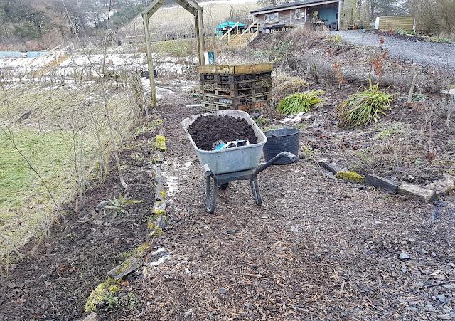 Tidying the Scottish native plant border
