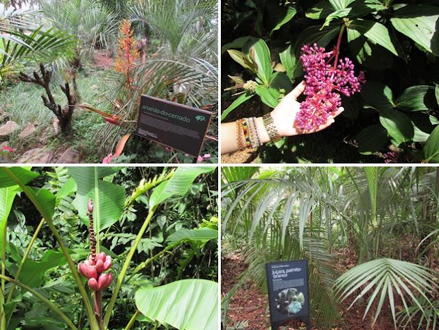 Exposição Botânica do Inhotim - MG
