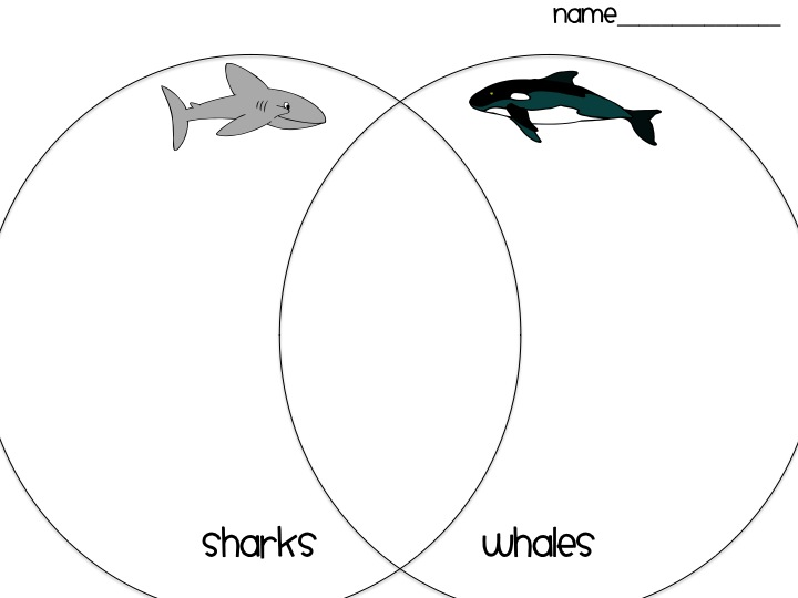 first grade fanatics  whales and sharks