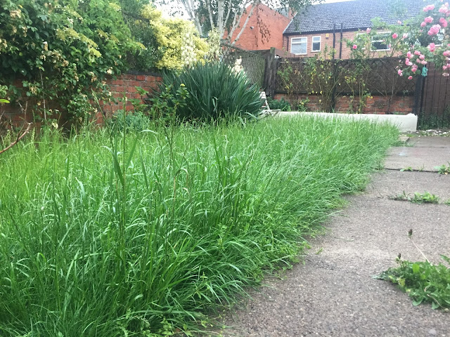 overgrown grass during vacation