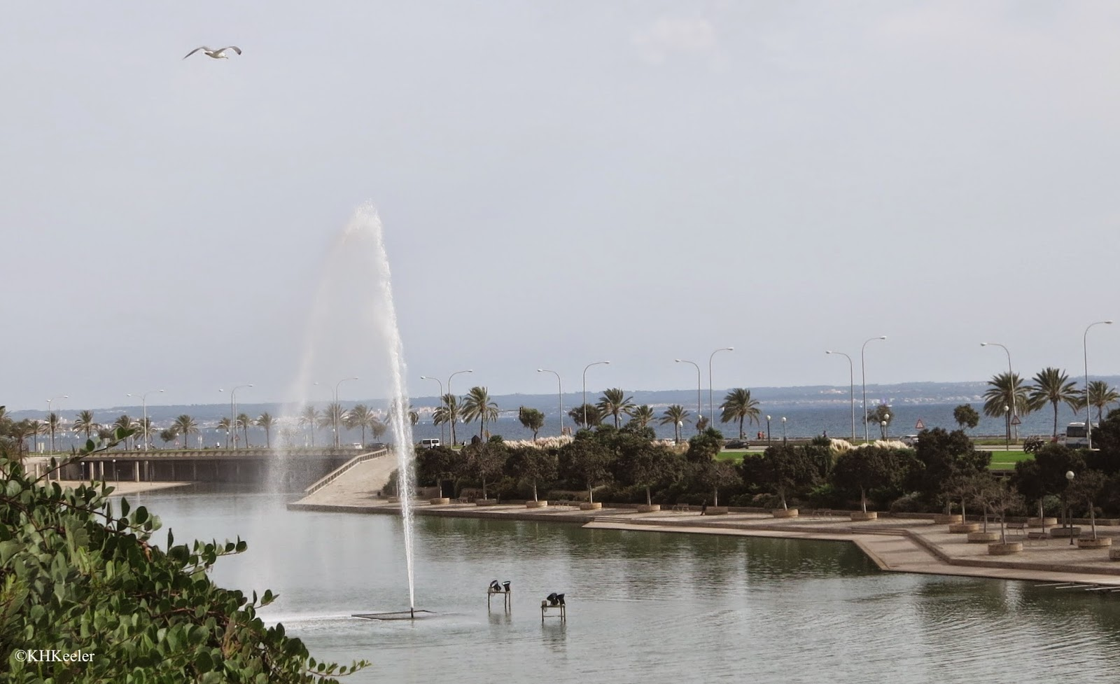 palms, Palma, Mallorca