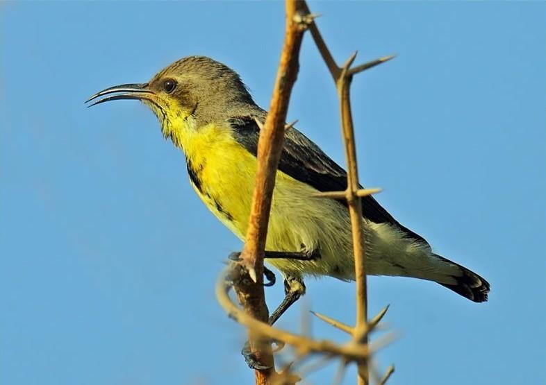 Image of a sunbird