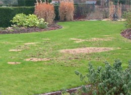 How To Deal With Chafer Grubs Naturally Wiggly Wigglers