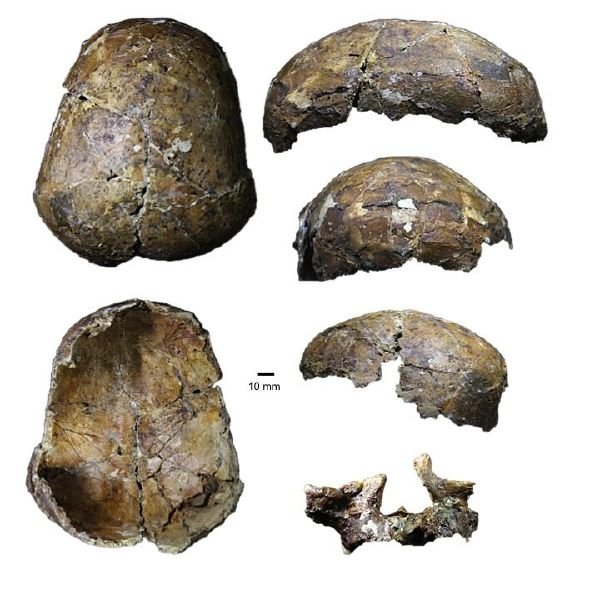 Ancient 'Deep Skull' from Borneo full of surprises
