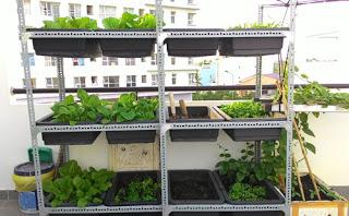 Kệ 2 tầng trồng rau sạch