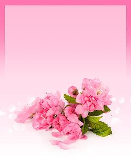 background bunga mawar merah terbaru