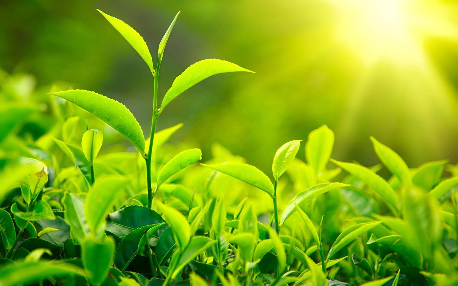 Biomassa, Potensi Alam Luar Biasa