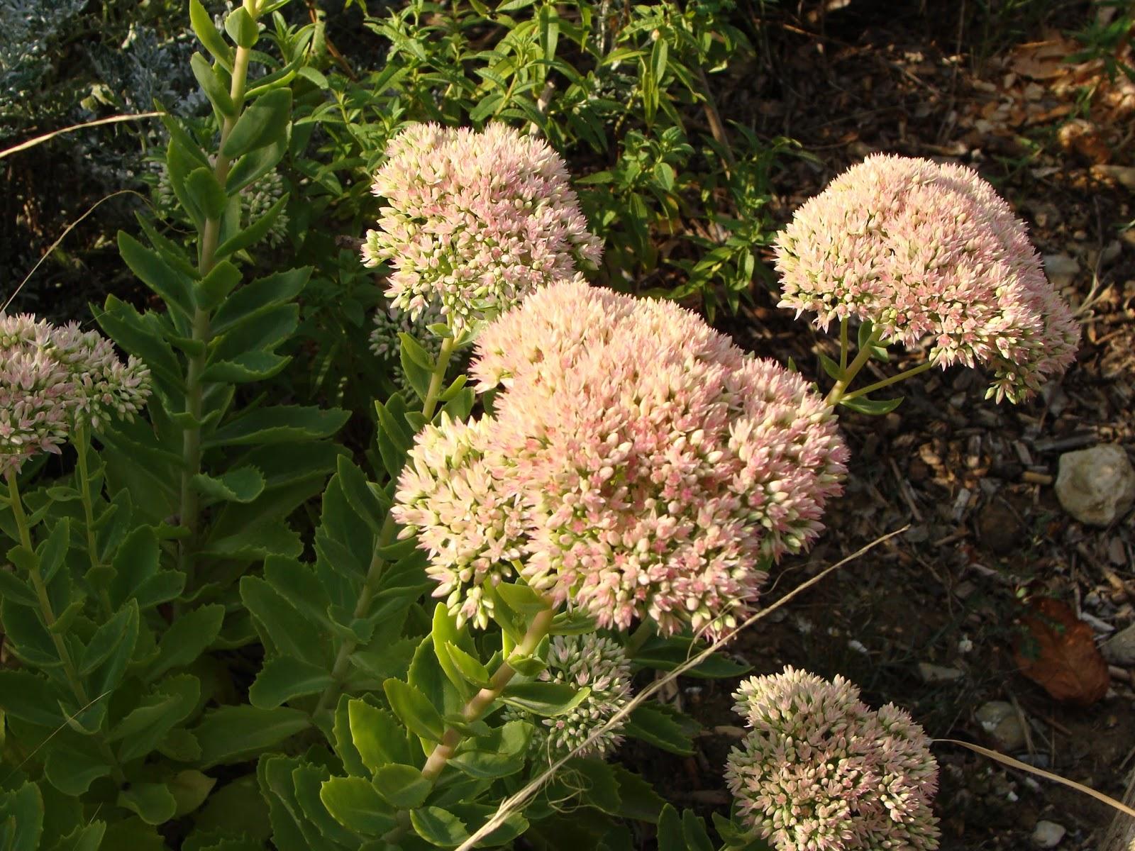 Plante Méditerranéenne Sans Arrosage jardine & ris: comment j'ai super réussi mon jardin sec